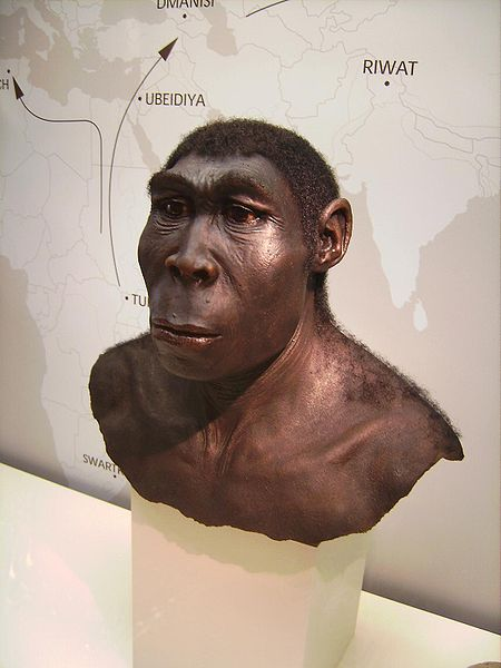 450px-Homo_erectus-ergaster