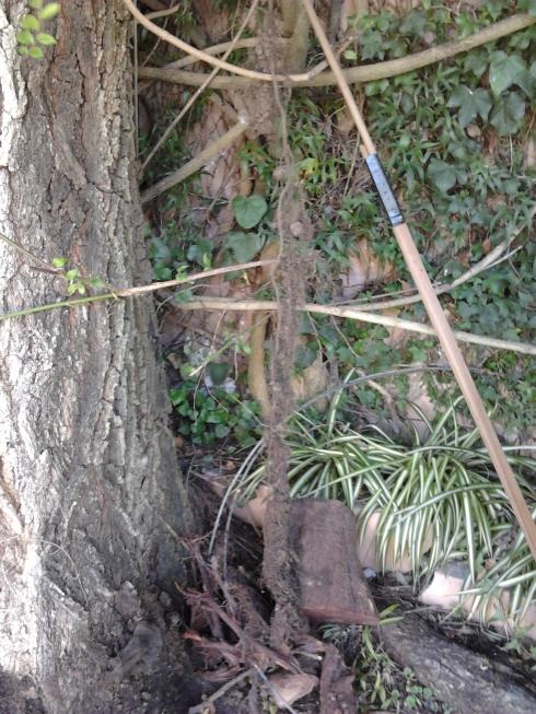 36 aRaiz sacada de la rejilla bajo árbol